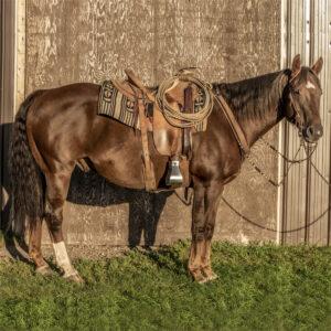 Cowboy Shady Jac